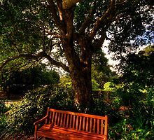 A Quiet Corner - Royal Botanical Gardens, Sydney - The HDR Experience by Philip Johnson