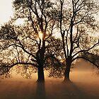 Dawning of the Tree by Mark Walton