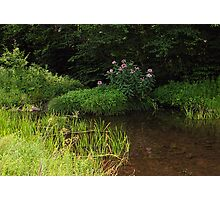 Flowers in the Stream Photographic Print