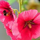 Bee in heaven  -Charmouth Dorset UK by lynn carter