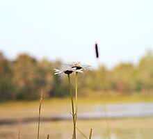 2 Daisies by the Lake by AdventureSetter