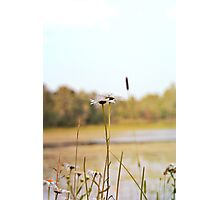 2 Daisies by the Lake Photographic Print
