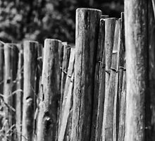 FENCE by fuchsphoto