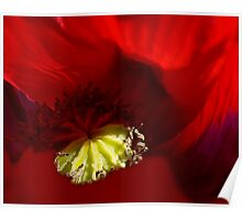 The Really Red of Poppies Poster