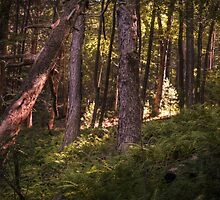 Light In The Woods by Aaron Campbell