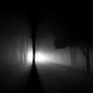 Twilight Fog by Tony Lomas