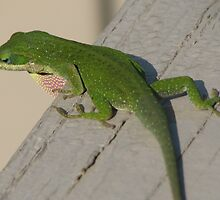 Native Green Anole-Known as American Chameleon by JeffeeArt4u