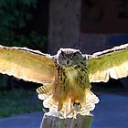 Eagle Owl by vette