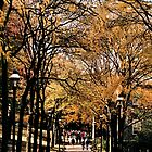 Fall Semester - Lehigh University by djphoto