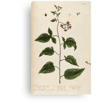 A curious herbal Elisabeth Blackwell John Norse Samuel Harding 1737 0096 Woody Nightshade Bittersweet or Bitter Sweet Canvas Print