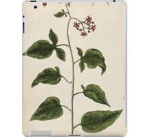 A curious herbal Elisabeth Blackwell John Norse Samuel Harding 1737 0096 Woody Nightshade Bittersweet or Bitter Sweet iPad Case/Skin