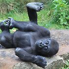 Western Lowland Gorilla by DutchLumix