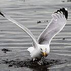 Seagull by Tabita Harvey