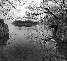 Tree branches on Coniston water by Shaun Whiteman