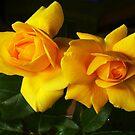 Boutons de Rose Landora by Gilberte