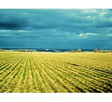 Drive By Fields Of Gold Photographic Print
