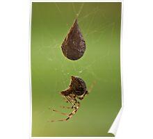 Mrs. Spider-2 Poster
