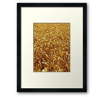 Harvest 2 - Grantham Framed Print