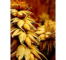 Wheat - Grantham Photographic Print