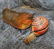 The Slug and Snail Joke. by relayer51