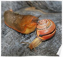 The Slug and Snail Joke. Poster