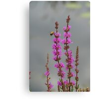 Bee Landing On Wetland Flower Canvas Print