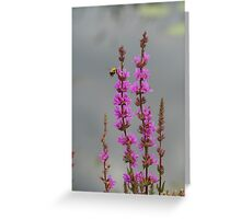 Bee Landing On Wetland Flower Greeting Card