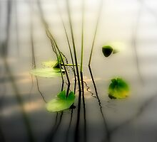 ZEN - The Art in Photography by Susanne Van Hulst