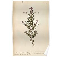 A curious herbal Elisabeth Blackwell John Norse Samuel Harding 1737 0616 Stechas or French Lavender Poster