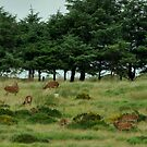 Red Deer by Russell Couch