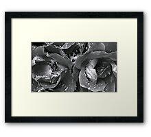 Roseshots 001   ^ Framed Print