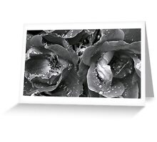 Roseshots 001   ^ Greeting Card