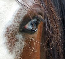 Eye of the Horse by EWphotography