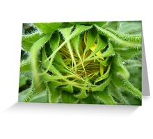 About to bloom Greeting Card