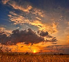 Colorful Sunset over field in summer by JEPhotography