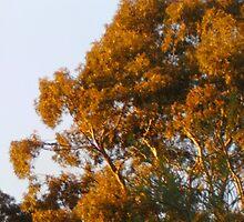 Ranga Tree by adgray