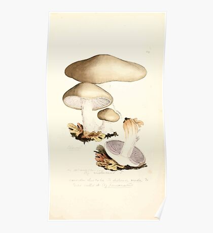 Coloured figures of English fungi or mushrooms James Sowerby 1809 0527 Poster