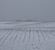 Winter Farm Fields - Rolling Hills on a Bleak Snowy Day by Georgia Mizuleva
