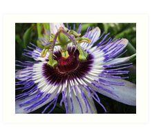 Passiflora Art Print