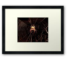 Come Into My Tangled Web.... Framed Print