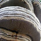 Tree Bumps :o) by saleire