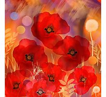 Hot summer poppies Photographic Print