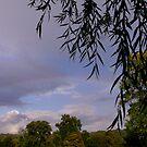 Fine Rainbow by AlGrover