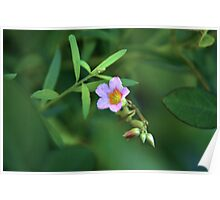 Magenta Flowers - sense of nature spirit Poster