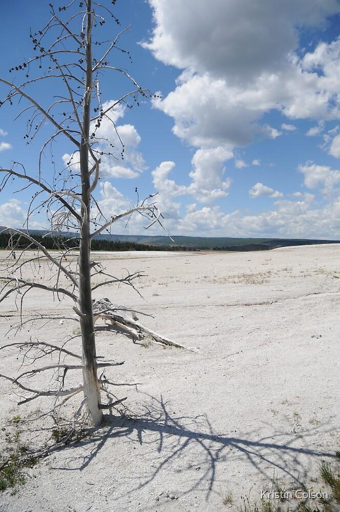 Desolate Beauty, Yellowstone National Park by Kristin Colson