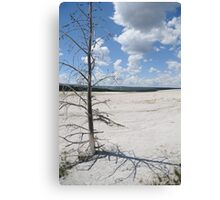 Desolate Beauty, Yellowstone National Park Canvas Print