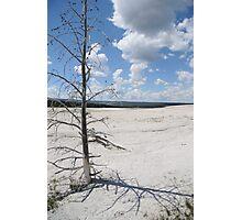 Desolate Beauty, Yellowstone National Park Photographic Print