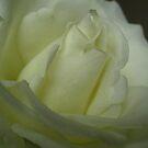White Beauty by junebug076