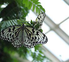 Paper Kite Butterflies by Kristin Colson