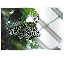 Paper Kite Butterflies Poster